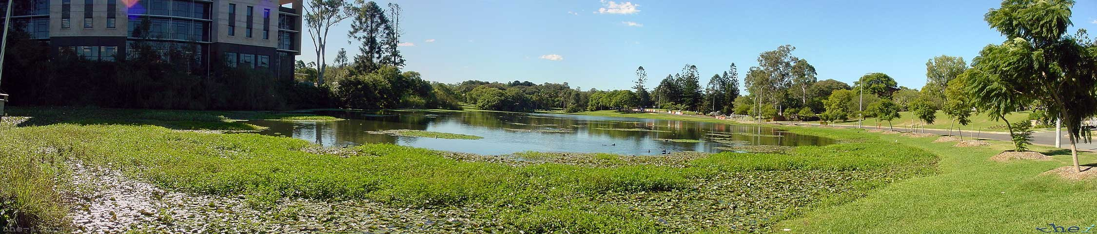Ponds at UQ